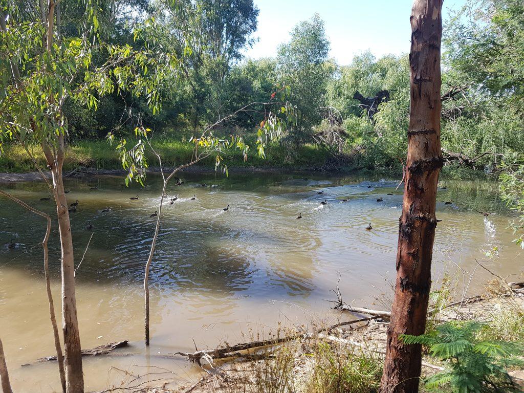 A healthy river