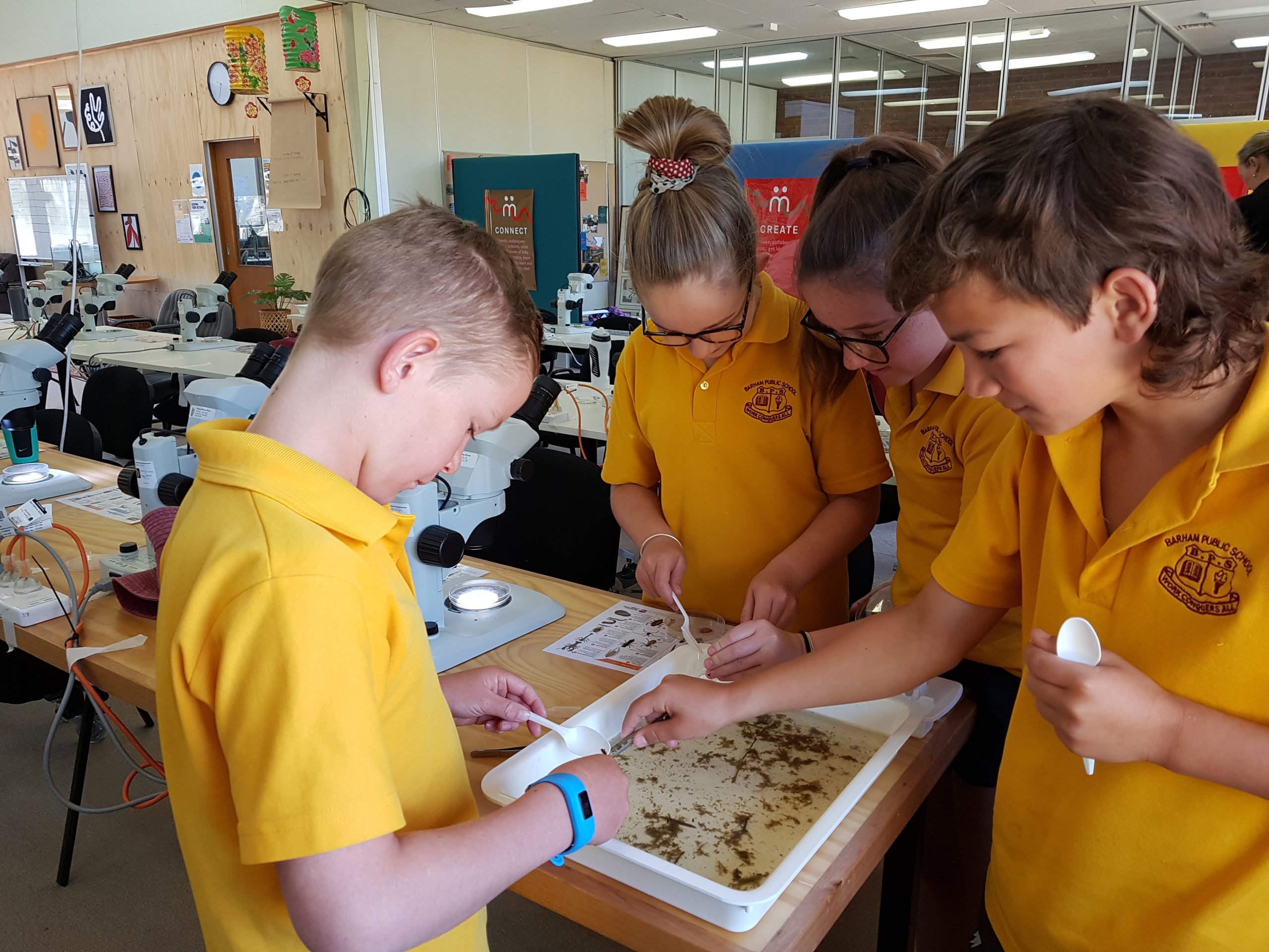 Students from Barham Public School learning about aquatic bugs